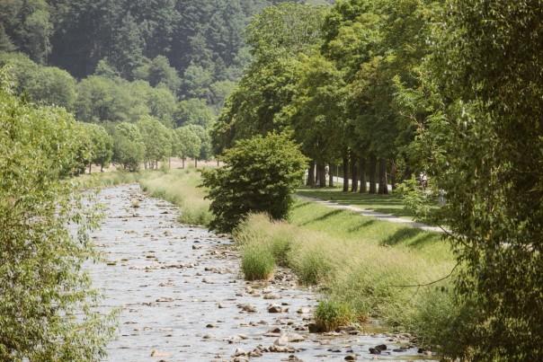 Dreisamrenaturierung mit dem Fußweg auf der rechten Seite und dem Wald im Hintergrund